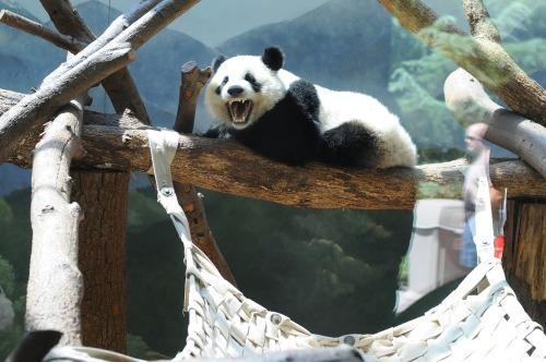 Zoopanda