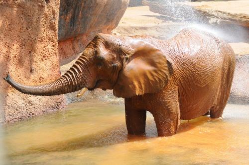 Zooelephant2
