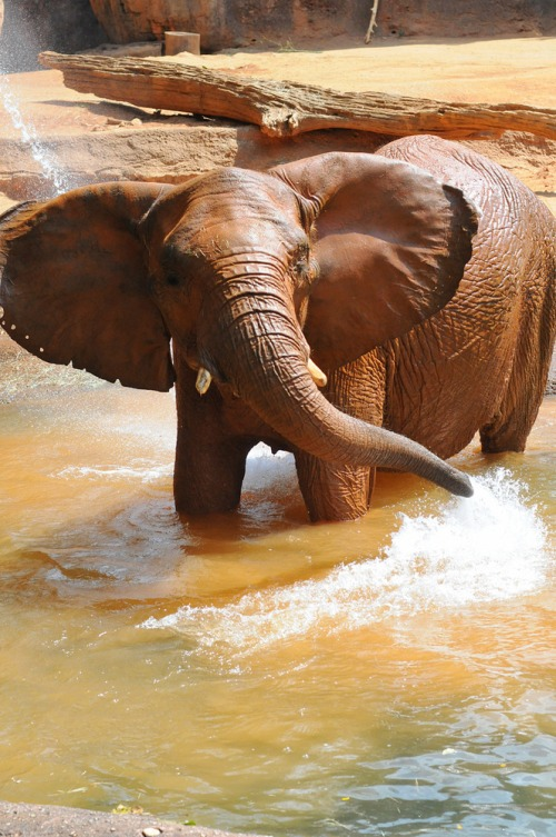 Zooelephant3